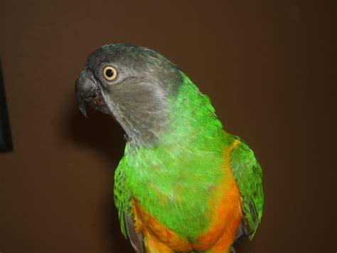 top 28 bird rescue tucson tucson parrot rescue parrot