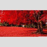 Music Piano Wallpaper Widescreen | 1280 x 720 jpeg 241kB