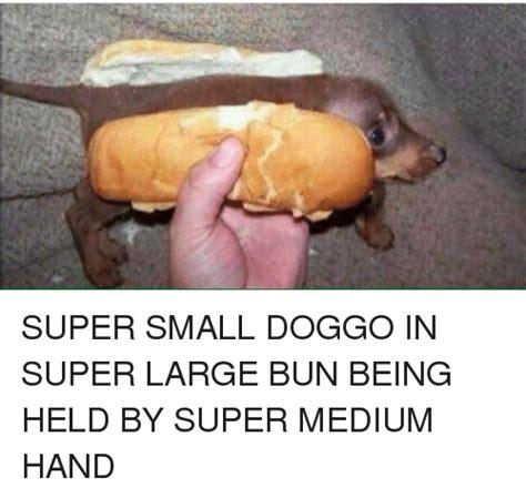 super small funny doggo memes of 2017 on me me dappered