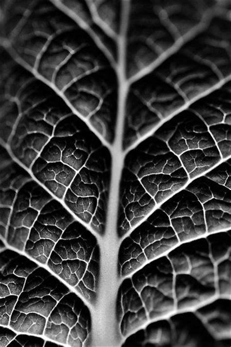 pattern and texture in photography best 25 symmetry photography ideas on pinterest pattern