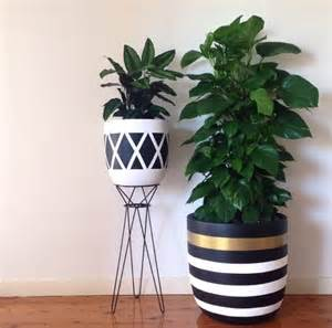 Indoor Plant Containers 37 Best Images About Flower Power On Green