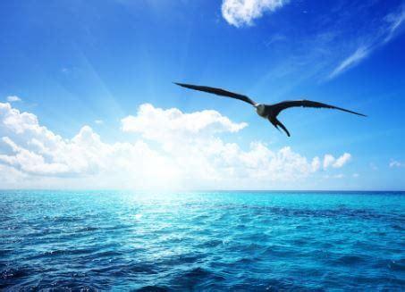 jonathan gabbiano non lasciate che nessuno vi dica mai come o dove volare