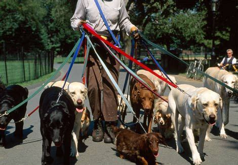professional walker how do you stage a home with pets carefully says professional trainer will