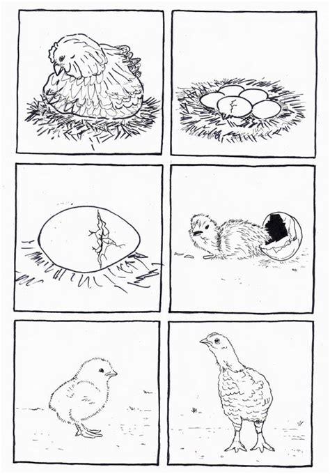 chicken life cycle coloring page 6 images s 233 quentielles de l oeuf 224 la poule dis bonjour