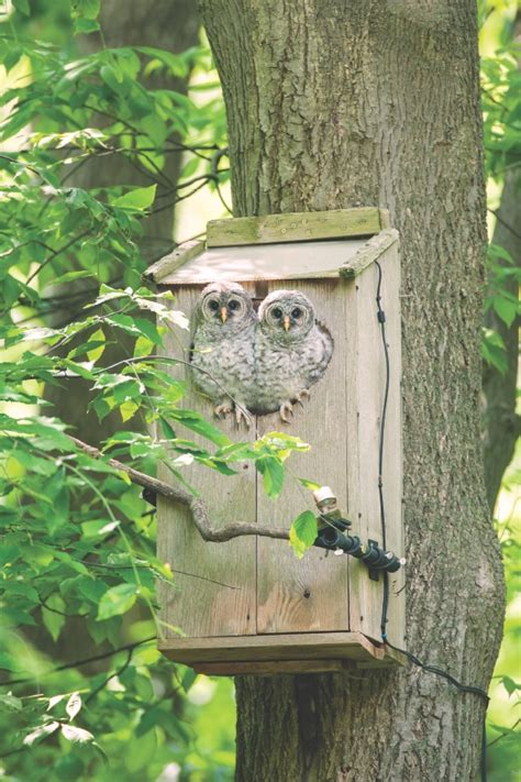 wild birds unlimited owl nest cam it s a real hoot