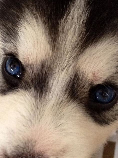 do puppies change color puppy eye color 28 images those puppy color by crazyninjacupcake on will my parti