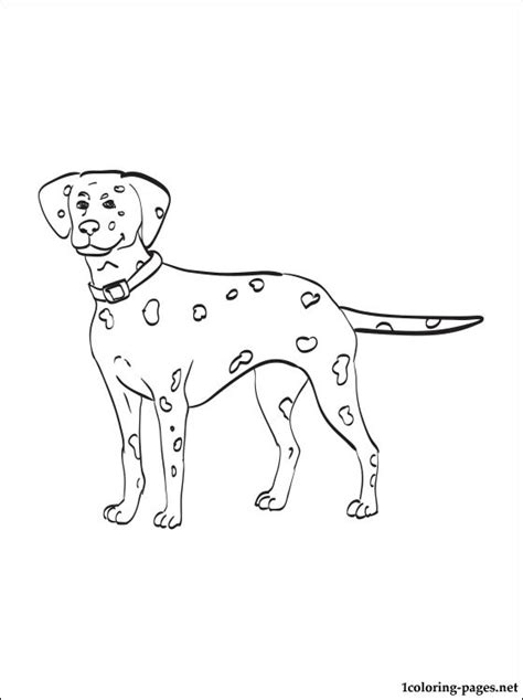 dalmatian coloring page coloring pages