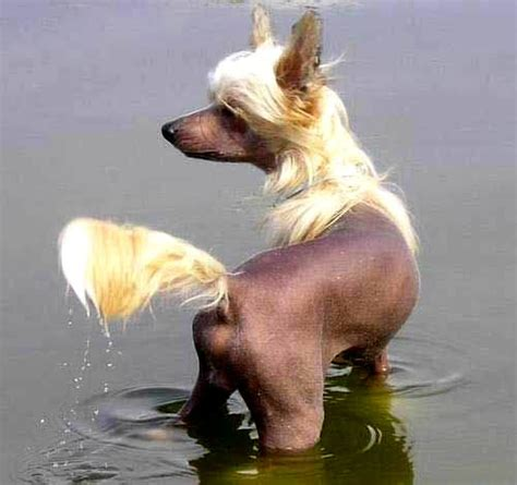 imagenes chistosos animales 8 im 225 genes etiquetadas con perros chistosos im 225 genes cool