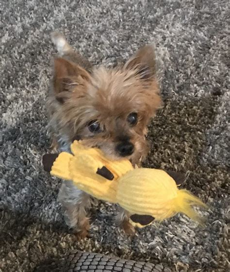 adoption washington washington pet adoptions