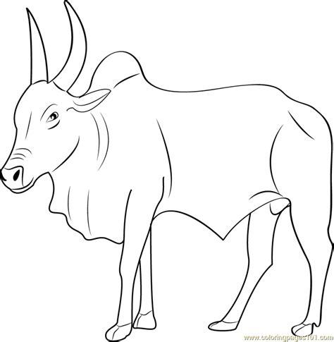 kangayam bull coloring page free bull coloring pages
