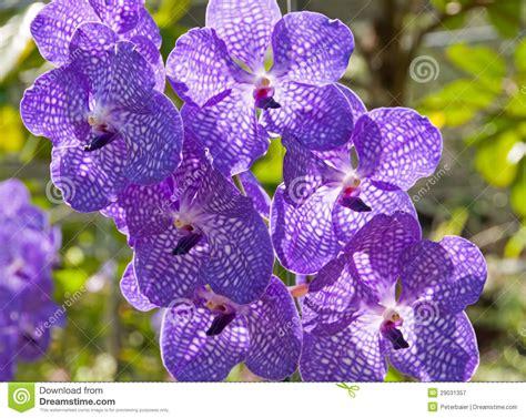 Läuse Bei Orchideen 3723 by Orqu 237 Dea Vanda Imagem De Stock Imagem De Jardim