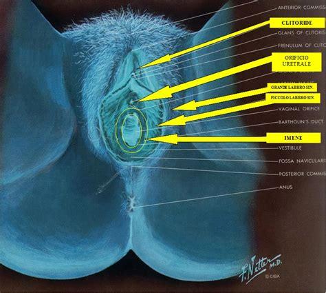 orgasmo femminile interno pietro sarcinella studio sant elmo ginecologo napoli