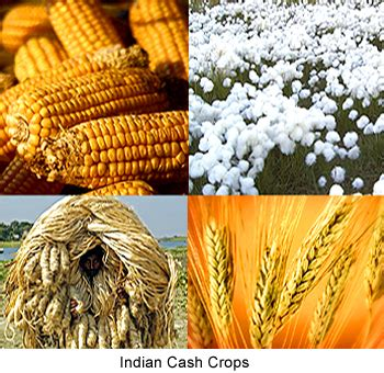 cuisine casher definition crop 6 most popular crops in india