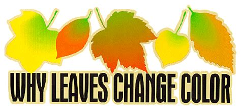 why do the leaves change color why leaves change color