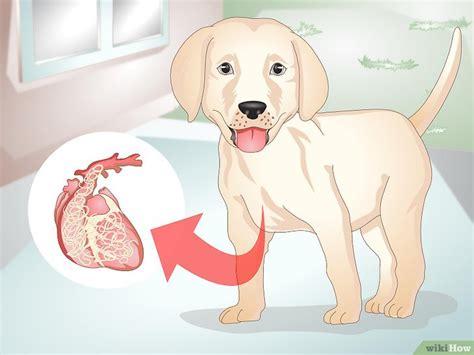 come si fanno le punture sul sedere come capire se il cucciolo ha i vermi 12 passaggi