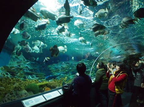 Lu Tempel Aquarium aquarium china doll adventures