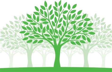 images of trees archive 600th anniversary of st