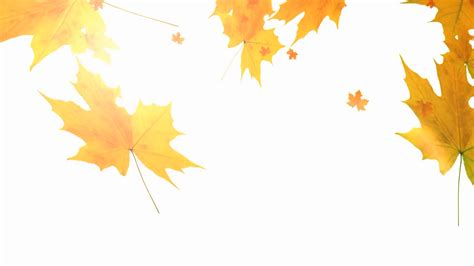 Falling Leaves With Lens Flare On A White Background Motion Background Storyblocks Video Fall Leaves On White Background