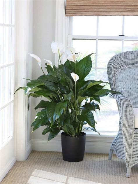 which plants can survive without sunlight 17 amazing houseplants to grow indoors without sunlight
