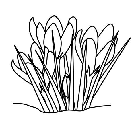 crocus flower coloring page crocuses clip art black and white spring flower