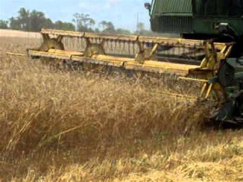 john deere 6600 combine harvesting rye in florida a