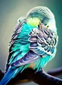parakeet colors colorful bird photography photography