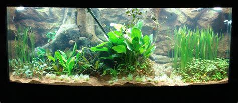 3d aquarium design program 3d gun image 3d aquarium backgrounds