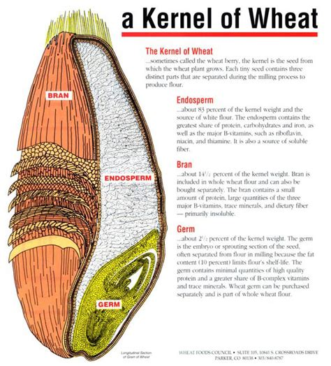 whole grain kernel diagram grilled vegetable salad with wheat berries and new