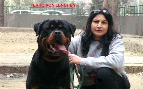 rottweiler in india search results for color by number new years calendar 2015