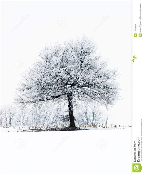 frosty tree frosty tree stock images image 12668794