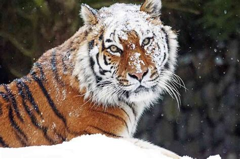 hewan langka  dunia  hampir punah gambar