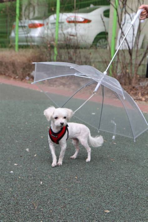 Are Cats The New Must Accessory by Puppia S Umbrella Lead Is This Season S Must