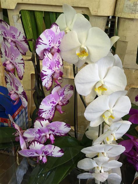 mercato dei fiori roma prezzi il mercato all ingrosso dei fiori di roma