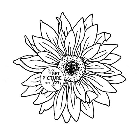 coloring pictures of sunflowers sunflower coloring page for kids flower coloring pages