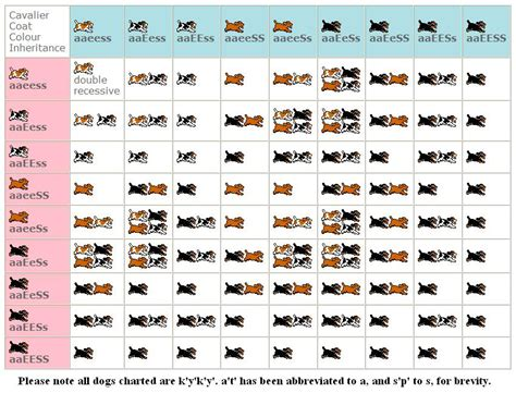 puppy color calculator chihuahua color chart breeds picture