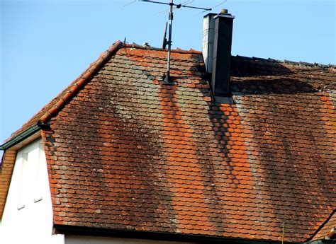 kupfer gegen moos warum sind auf manchen d 228 chern helle streifen oben bis