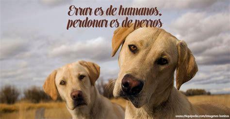 imagenes mamonas de animales im 225 genes de perros muy bonitas y graciosas 161 no te las