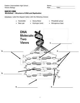 How Is Dna Copied Worksheet