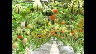 Backyard Vegetable Garden Layout Home Vegetable Garden Ideas Youtube