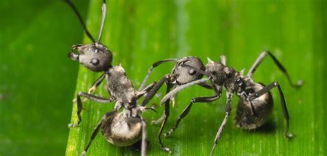 Ameisenplage Im Garten Bek Mpfen 2797 by Ameisen Im Garten Ameisen Im Garten Ameisen Im Hochbeet