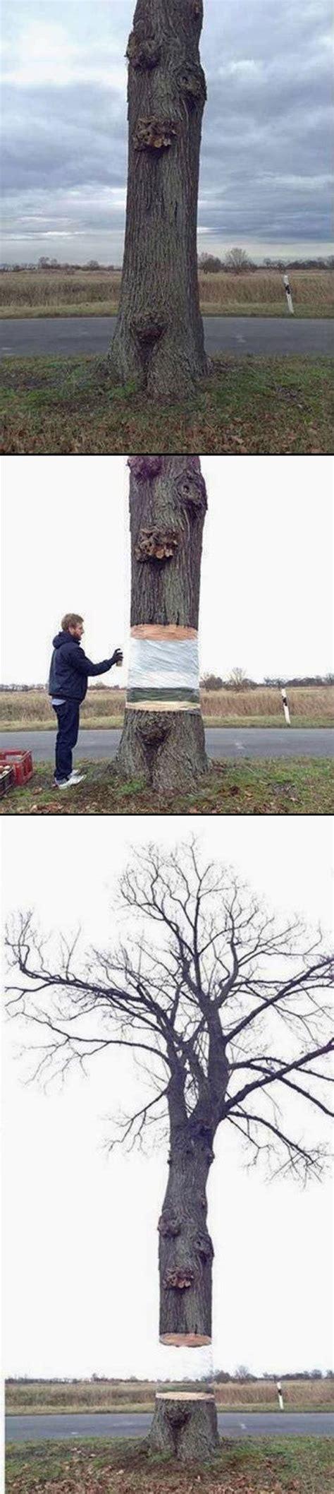 ilusiones opticas concepto since when can trees float chistes ilusiones 243 pticas y