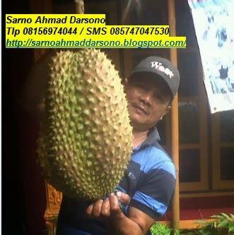 Bibit Durian Bawor Sarno durian bawor bibit durian bawor bhineka bawor durian
