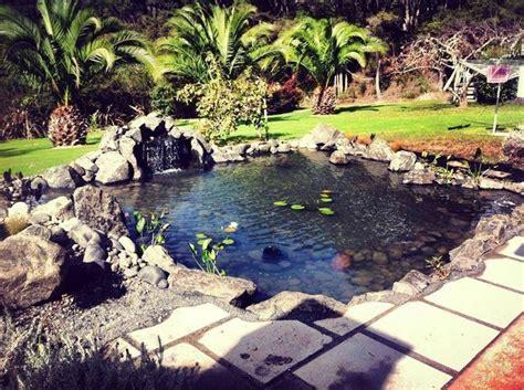 laghetto in giardino costruire un laghetto piante acquatiche come costruire
