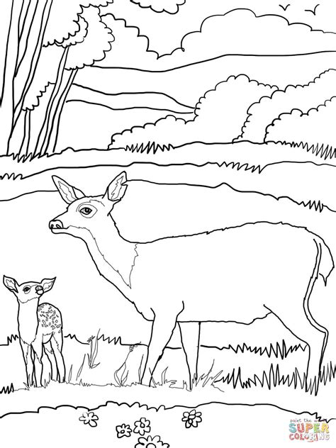 coloring pages of mule deer baby mule deer with mother coloring page free printable