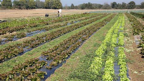 imagenes satelitales para agricultura la agricultura ecol 243 gica puede alimentar al mundo