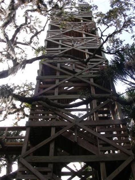 a view of the tower on the canopy tour. picture of
