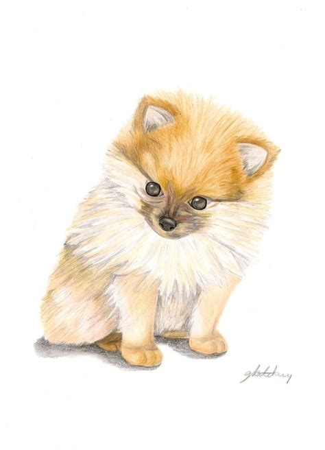 pomeranian drawings pomeranian outline drawing pictures to pin on pinsdaddy