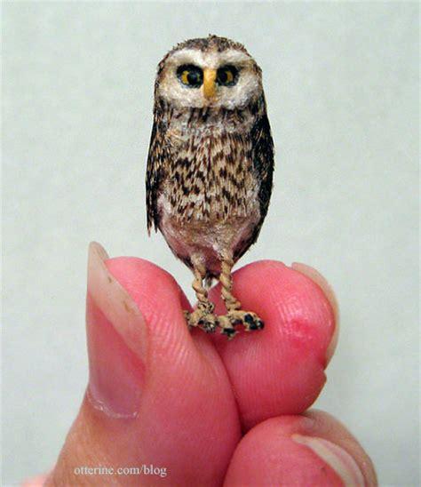 Cutie Owl whooooo s a cutie