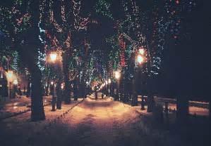 christmas light night winter wood image 282442 on
