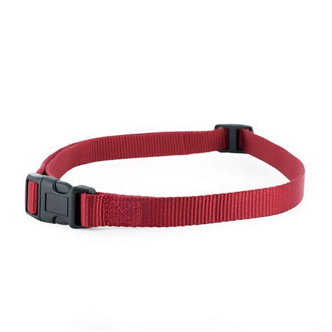 petsafe collar 3 4 replacement collar with no holes by petsafe grp bcspcs
